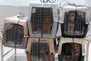 Playa Pet Transport: Change A Life On Your Way Home