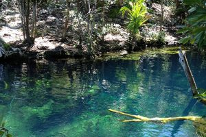 Cenote Committee