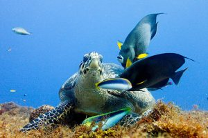 What are Marine Protected Areas for?