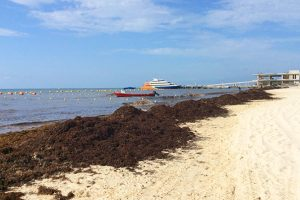 Opposing Viewpoints: Dealing with Sargassum